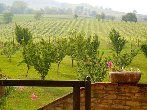 Title - Vineyards